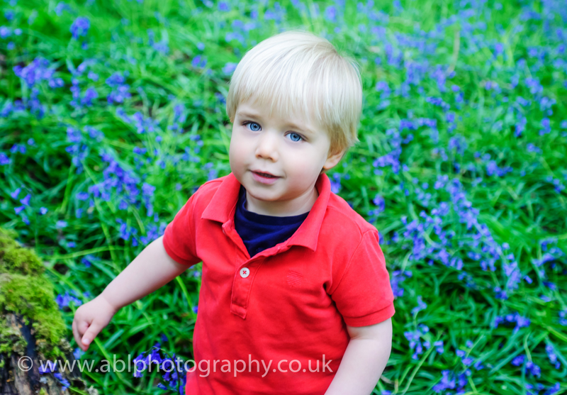 Bluebells photography heaven